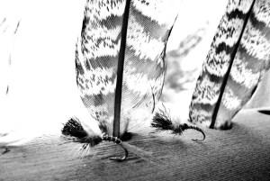 vg black wing