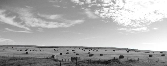 wide hay bales
