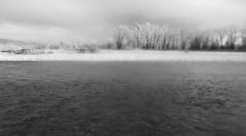 blur trees
