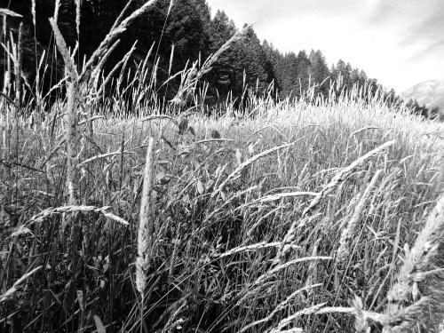 grass banks (1)