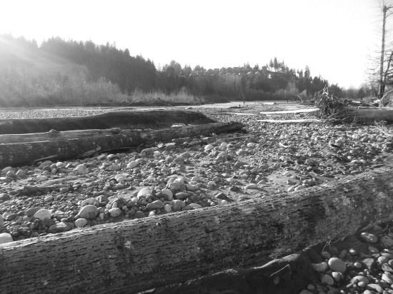 river logs