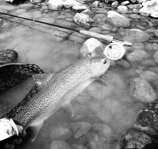 clear trout