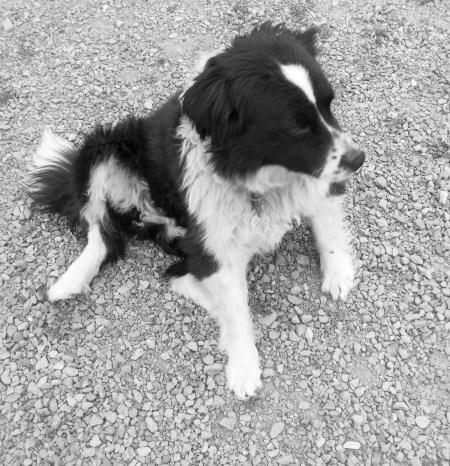 midge dog 2