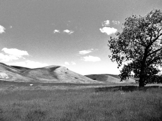 treehills