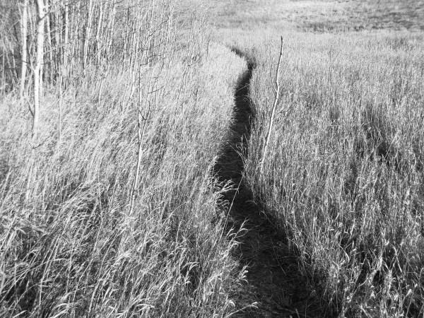 path (1)
