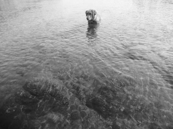 ab wading