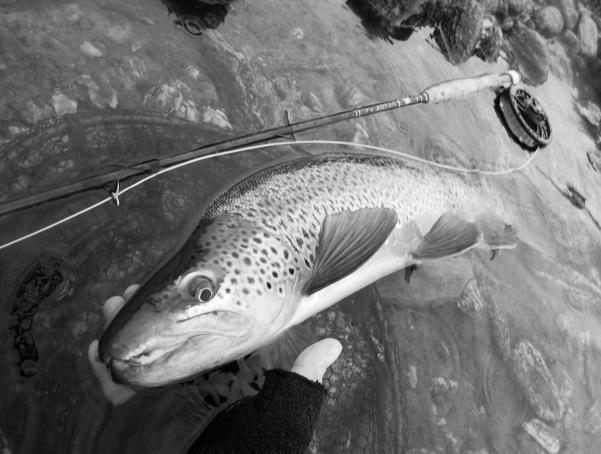 lastfish1